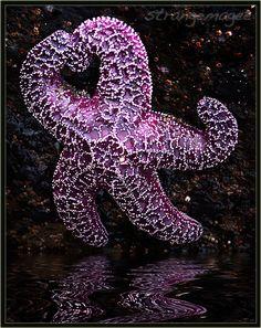 ~ starfish ♥