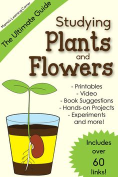 The Ultimate Guide to Studying Plants and Flowers - hands-on projects, experiments, printables, and more!