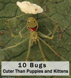 10 Bugs That Are 5,000 Times Cuter Than Puppies Or Kittens wordsncollision