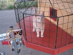 Kitty observation deck! M needs one of these out the window so he can look around safely!
