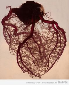 The human heart stripped of fat and muscle