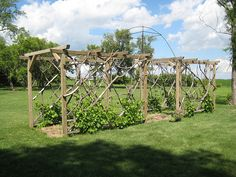 grape arbors | Grape Arbor | Flickr - Photo Sharing!