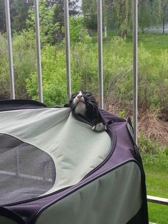 This cat who knew camping was a bad idea. | 37 Animals Who Failed So Spectacularly They Almost Won