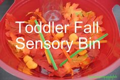 Frogs & Snails & Puppy Dog Tails (FSPDT): Fall Sensory Bin-toddler
