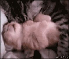 gif. Mama comforts kitty having nightmare