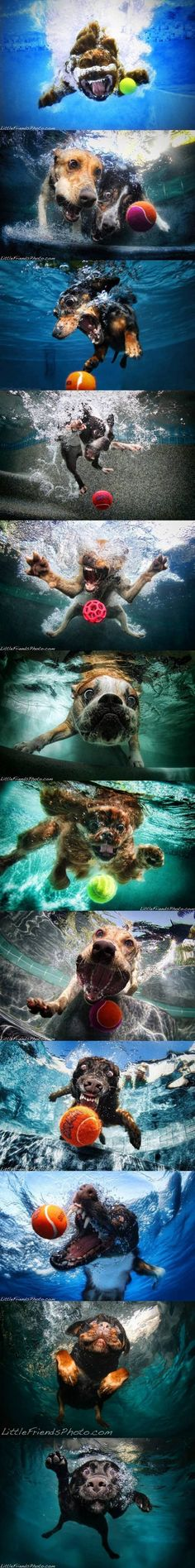 Fabulous photography of dogs diving underwater for tennis balls.
