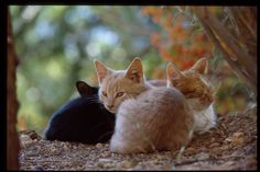 Cats from Delphi