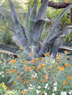 Center for Desert Living Trail-Desert Botanical Garden
