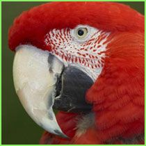 San Diego Zoo Rainforest Wildlife webpage with lots of pictures and animal sounds-great for tablet time in class.