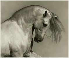 Andalusian. My second favorite breed.