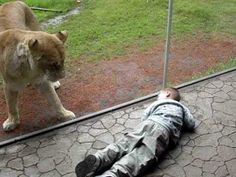 Hungry Lion Tries to Eat Baby -- Funny/Scary