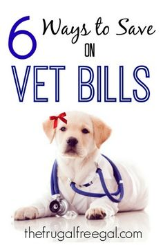 6 Ways to Save on Vet Bills