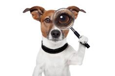 What You Need To Know To Prevent Pet Theft  #dog