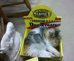 treats, dogs, funny cats, dog treat, food, funni, premium dog, boxes, kitty