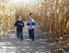A Montessori Going Out Activity: Visiting a Farm for Fall- Tips for visiting a farm as a practical life, real world activity. Montessori teachers take care to prepare the environment prior to the children's arrival. Visiting an orchard or pumpkin patch should be no different!
