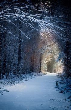 Snow Path, Washington