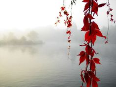 early mornings, autumn leaves, color, decorating ideas, background, red flowers, fall decorating, wallpapers, autumn falls