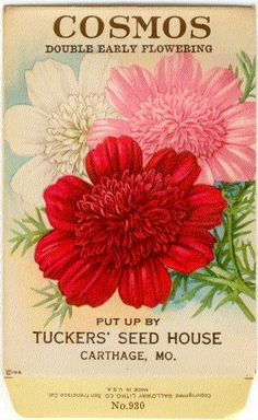 -Vintage Flower Seed Packet Tuckers Seed House Lithograph COSMOS ...