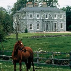 horse in the front yard, green green grass, daffies, fab house <3