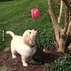 When will I be tall enough to smell the flowers?