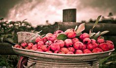 Pomegranate, from Mauritius Island