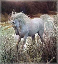 hors, pegasus, anim, fantasi, fairi tale, enchant, magic creatur, unicorns, thing