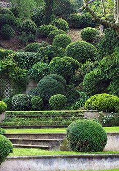 Boxwood on a hill.