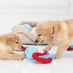 How To: Clean Dog Toys via #MarthaStewartPets and #PetSmart. #petcare #pettips #howto