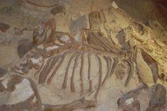 Dig Site - Mammoth Dinosaur Park, South Dakota