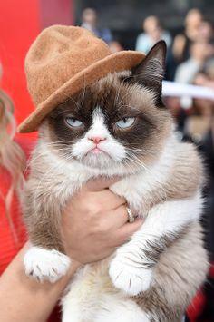 2014 MTV Movie Awards: Grumpy Cat (BEST DRESSED, OBVI!) xoxo grumpy cat on the red carpet, grumpi cat, pharrel hat, grumpy cats, cat photos