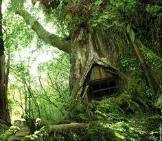 forests, fairies, fairy houses, tree houses, treehous, trees, place, tree homes, fairy homes