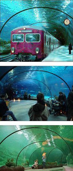 real underwater train. MOSTPINNED FAKES N FOOLS On Pinterest   Photoshop, Rock Real Underwater Train