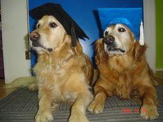 Graduates of Dog obedience school