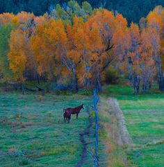 Chama, New Mexico, Where I am from :)
