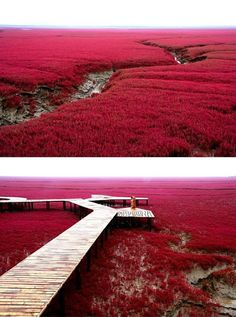 Red Beach in Panjin, China