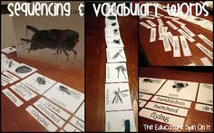 Sequencing & Vocabulary Words for The Very Quiet Cricket