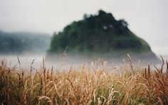 fog and field.