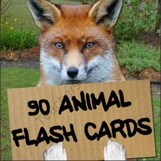 90 Animal Flash Cards from TheSpeechstress on TeachersNotebook.com -  (19 pages)  - 90 animal photo cards