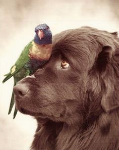 sunday brunch, newfoundland dogs, pet, parrot, bird dogs, puppi, birds, friend, animal