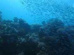 The deep blue beautiful sea of Jailolo Bay!