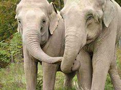 #Elephant #Hug Elephant Sanctuary in Tennessee