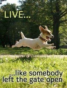 Live Like Someone Left The Gate Open  http://www.LifeLikeSomeoneLeftTheGateOpen.com Kimberly burnham, PhD, The Nerve Whisperer Transformational Author, Inspirational Speaker