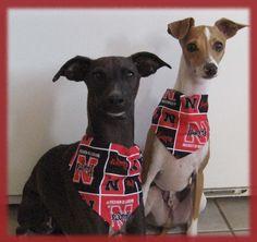 Nebraska Husker pups