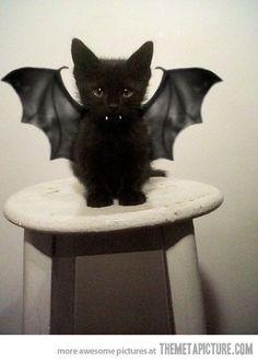 a mew mew BAT.