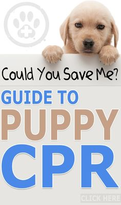 Could you Save Me? The Guide to Puppy CPR.