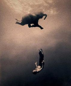 Ashes and Snow-- Gregory Colbert