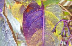 fall by Catherine Demers, via Flickr