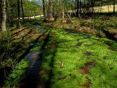spring run tributary | big canoe creek | st. clair county