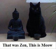 zen and meow  #cat