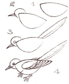 How to draw a bird. sketch, workshop, drawings, how to draw birds, how to paint birds, how to draw a bird, 3d cartoon, art kids, doodling how to